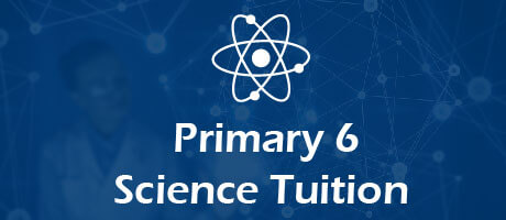 Science Tuition for primary 6
